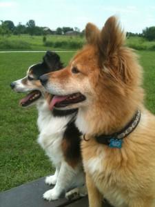 Jasper_and_Sasha,_The_Wonder_Dog